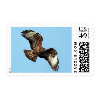 Common Buzzard Raptor Mail Postage