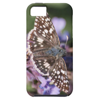 Common Checkered Skipper iPhone 5 Cover