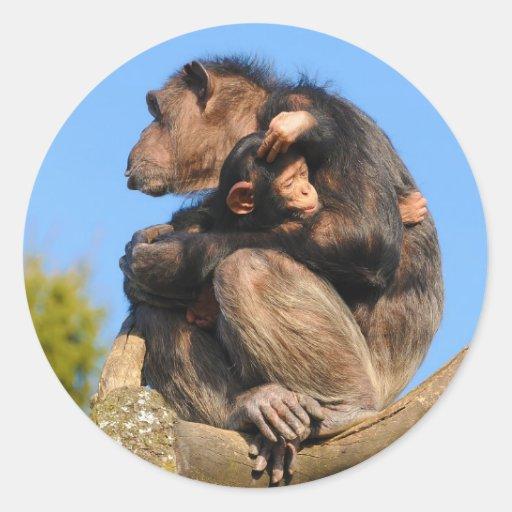 Common Chimpanzee Chimp Pan Troglodytes Stickers