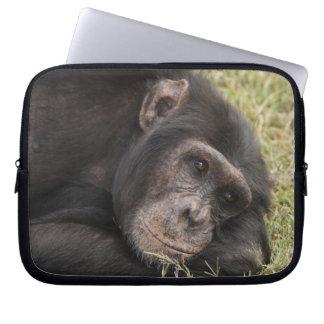 Common Chimpanzee posing resting Computer Sleeve