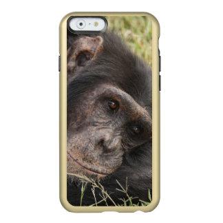 Common Chimpanzee posing resting Incipio Feather Shine iPhone 6 Case