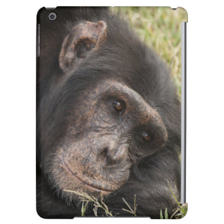 Common Chimpanzee posing resting iPad Air Cases