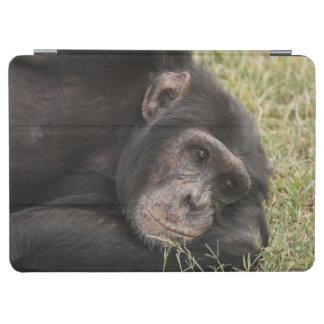 Common Chimpanzee posing resting iPad Air Cover