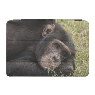 Common Chimpanzee posing resting iPad Mini Cover