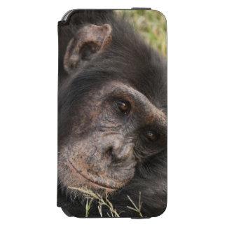 Common Chimpanzee posing resting iPhone 6/6s Wallet Case