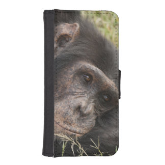Common Chimpanzee posing resting Phone Wallet Cases