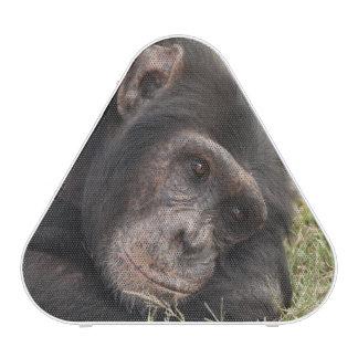 Common Chimpanzee posing resting Speaker
