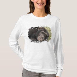 Common Chimpanzee posing resting T-Shirt