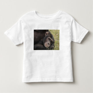 Common Chimpanzee posing resting Tee Shirt