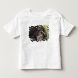 Common Chimpanzee posing resting Toddler T-shirt