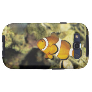 Common clownfish (Amphiprion ocellaris), Galaxy S3 Covers