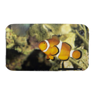 Common clownfish (Amphiprion ocellaris), iPhone 3 Case