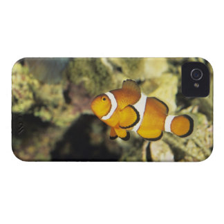 Common clownfish (Amphiprion ocellaris), iPhone 4 Case