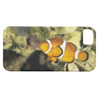 Common clownfish (Amphiprion ocellaris), iPhone 5 Covers