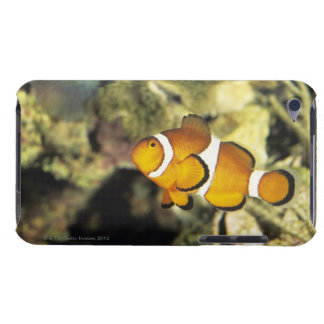 Common clownfish (Amphiprion ocellaris), iPod Case-Mate Cases