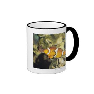 Common clownfish (Amphiprion ocellaris), Ringer Coffee Mug