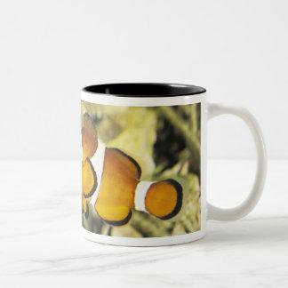 Common clownfish (Amphiprion ocellaris), Two-Tone Coffee Mug