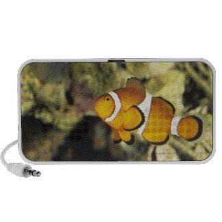 Common clownfish (Amphiprion ocellaris), Notebook Speaker