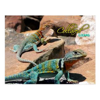 Common Collared Lizard, New Mexico Postcard