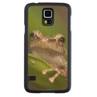 Common coqui, Eleutherodactylus coqui, El Carved® Maple Galaxy S5 Slim Case