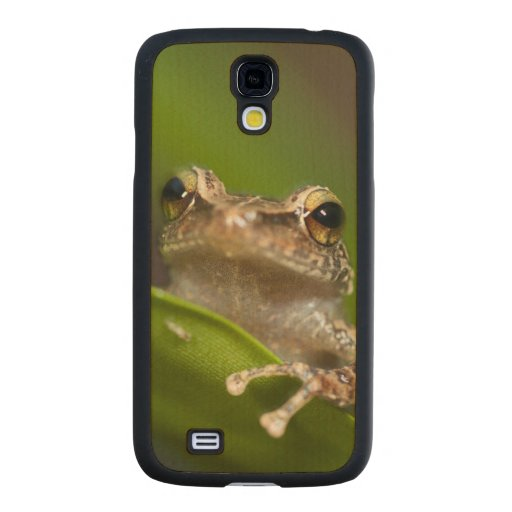Common coqui, Eleutherodactylus coqui, El Carved® Maple Galaxy S4 Case