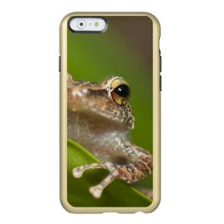 Common coqui, Eleutherodactylus coqui, El Incipio Feather® Shine iPhone 6 Case