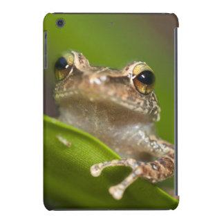 Common coqui, Eleutherodactylus coqui, El iPad Mini Cases