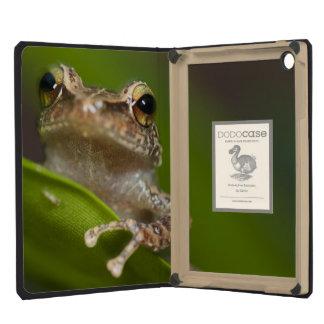 Common coqui, Eleutherodactylus coqui, El iPad Mini Retina Case