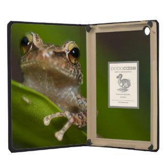 Common coqui, Eleutherodactylus coqui, El iPad Mini Retina Cover