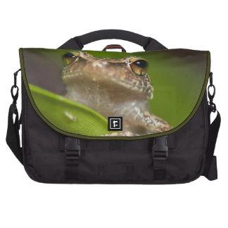Common coqui, Eleutherodactylus coqui, El Commuter Bags