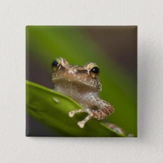 Common coqui, Eleutherodactylus coqui, El Pinback Button