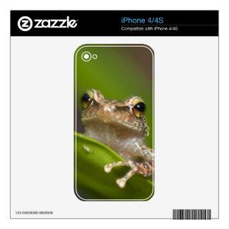 Common coqui, Eleutherodactylus coqui, El Skins For The iPhone 4S
