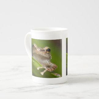 Common coqui, Eleutherodactylus coqui, El Tea Cup