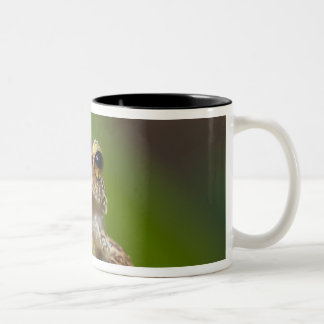 Common coqui, Eleutherodactylus coqui, El Two-Tone Coffee Mug