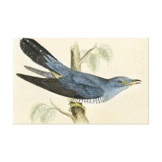 Common Cuckoo Gallery Wrap Canvas