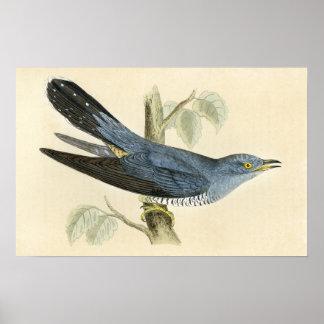 Common Cuckoo Poster