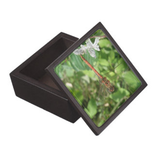 Common Darter Dragonfly Gift Box