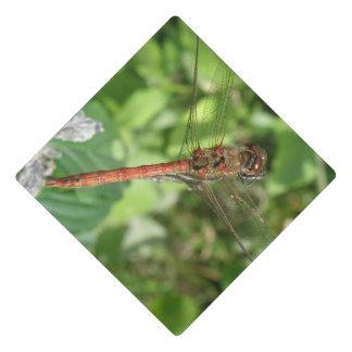 Common Darter Dragonfly Graduation Cap Topper