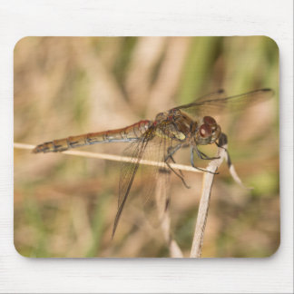 Common Darter Dragonfly Mouse Pad