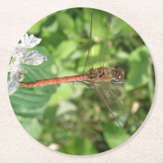 Common Darter Dragonfly Paper Coasters