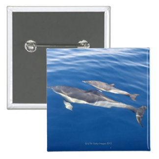 Common Dolphin Pinback Buttons