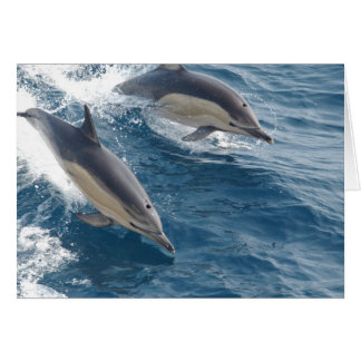 Common Dolphin Card