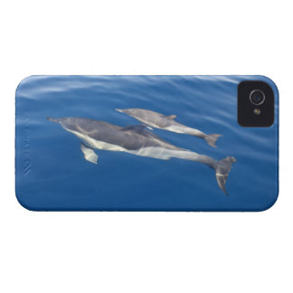 Common Dolphin Case-Mate iPhone 4 Case