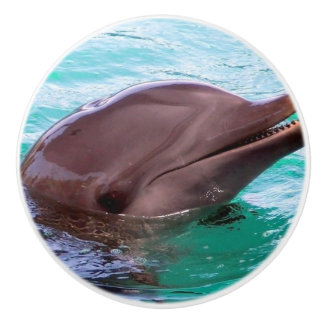 Common Dolphin Ceramic Knob