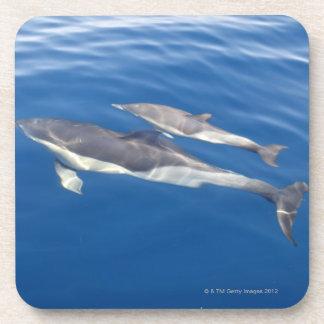 Common Dolphin Coaster