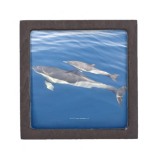 Common Dolphin in the strait Gift Box