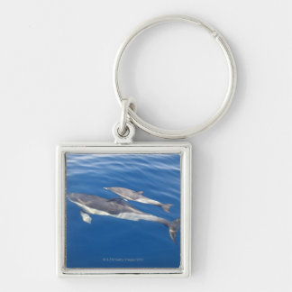 Common Dolphin in the strait Key Chain