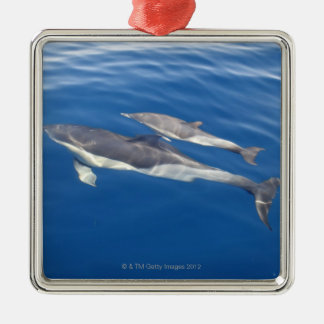 Common Dolphin in the strait Metal Ornament