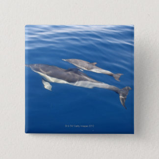 Common Dolphin in the strait Pinback Button