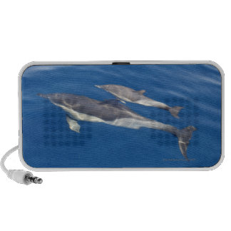 Common Dolphin in the strait Portable Speaker